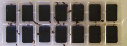 Idée de LaGlaneuse : des moules à glaçons font d'excellents petits moules !!!