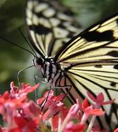 Cliquez sur l'icone papillon.pps en fin d'article !
