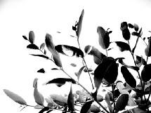 Je désinfecte mon intérieur avec une plante amie : l'eucalyptus