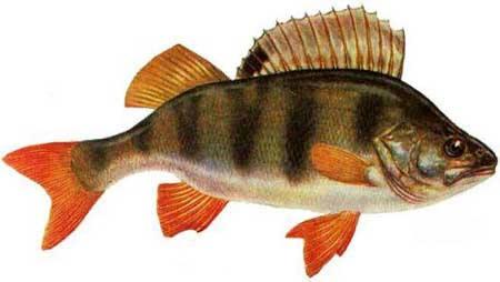 Je mange du poissonhttp://www.laglaneuse.fr/admin/list/all/page/ de manière responsable !