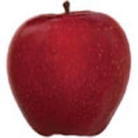 Croquez des pommes pour réduire Alzheimer en compote !