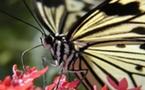 La leçon du papillon...