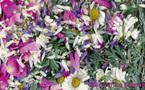 Je scanne les fleurettes !